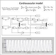 Quantitative Human Systems Physiology - Cardiovascular model