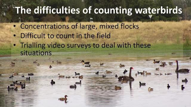 Étude de cas: faire progresser la recherche sur la faune- développement d'une solution de traitement des enregistrements vidéo d'oiseaux aquatiques