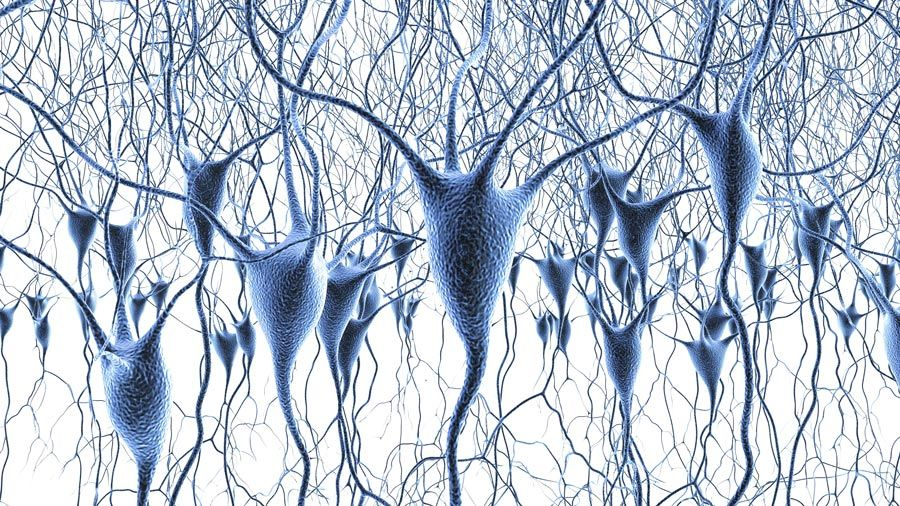 Neurosciences cellulaires et des systèmes